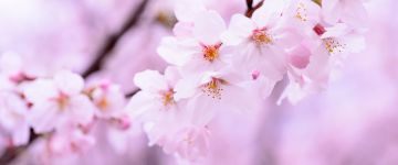 Votre agence de voyages à Saint-Omer vous propose Japon